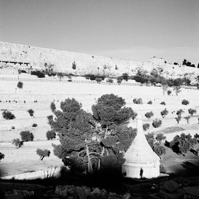 Adi Shalmon, MT of Olives