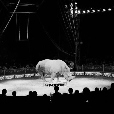 Jože Suhadolnik, Circus, 1999